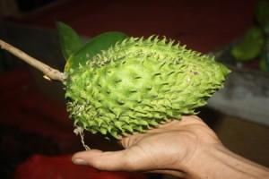 Le corossol, un fruit miraculeux